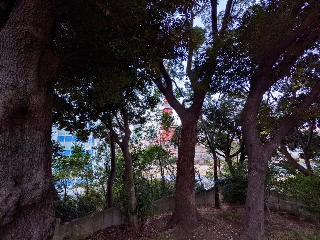 木々の奥に隠れる「東京タワー」